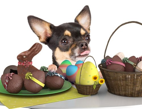 Chocolate Toxicity and Easter Dangers For Your Pets